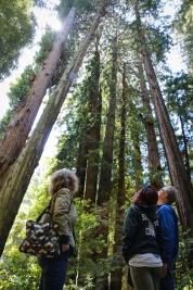 famredwoods1